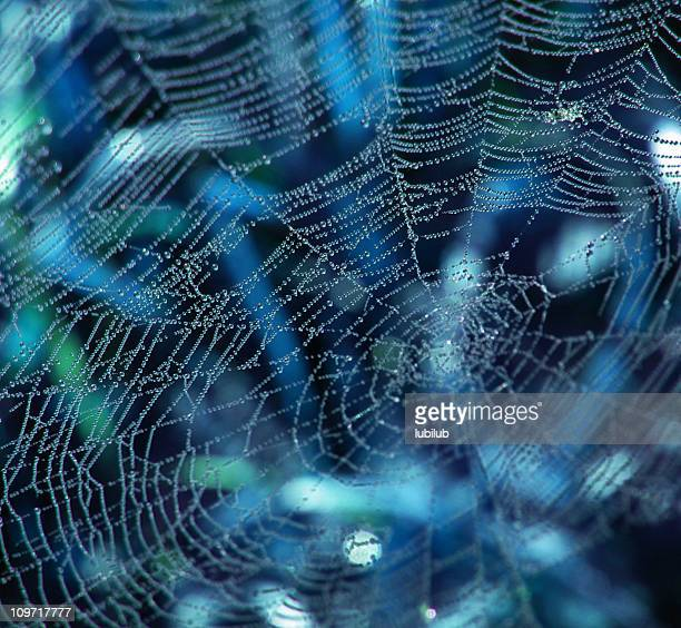 Dew drops like pearls on a string in spider web