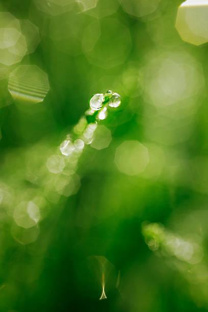 Dew Drops #2