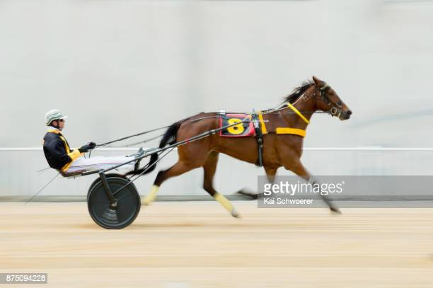 Dexter Dunn driving Musculus warms up prior to Race 1 Metropol Mobile Trot during Show Day Races at Addington Raceway on November 17 2017 in...