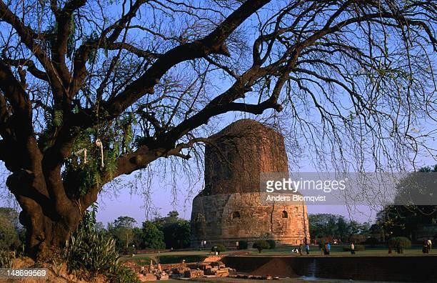 dhamekh stupa at sunset. - dhamekh stupa stock photos and pictures