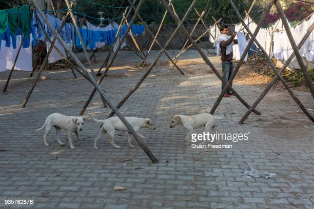 Dhobi wallahs or washermen hang clothes and linen to dry at the Devi Prasad Sadan Dhobi Ghat in New Delhi India The ghat is home to around 64...