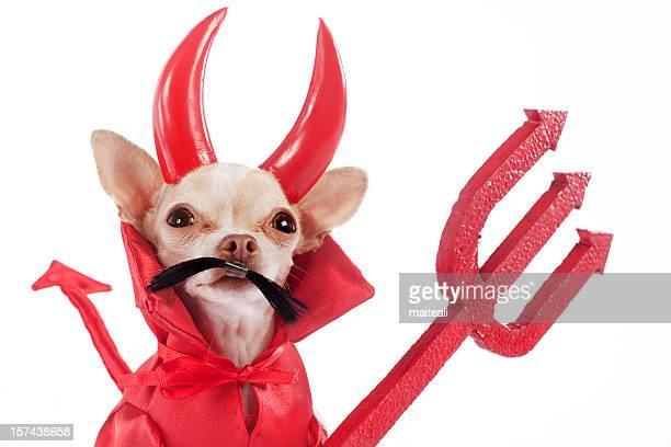 diablillo - diabo imagens e fotografias de stock