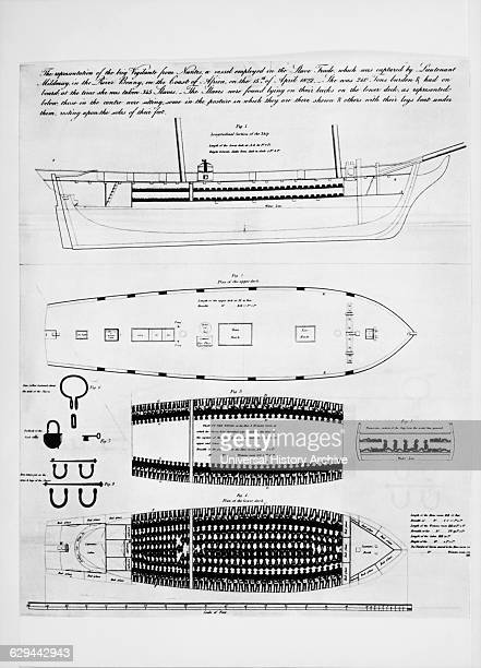 Diagram of the Brig Vigilante which was Captured in 1822 off Coast of Africa with 345 Slaves Crowded in the Lower Decks
