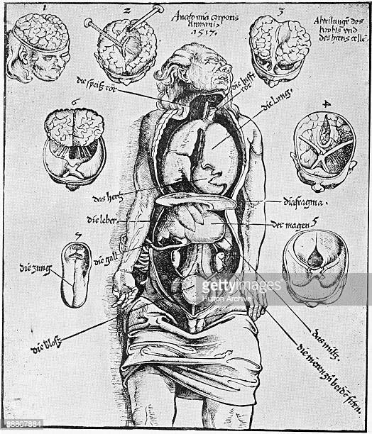 A diagram of the human brain and other organs 'Anatomia Corporis Humani' from 'Spiegl der Arztny' by Lorenz Fries 1518 The diagrams are based on a...