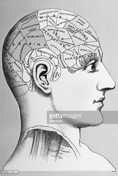 Diagram of the human head showing the phrenological regions corresponding to various human capacities Undated lithograph BPA2# 3911