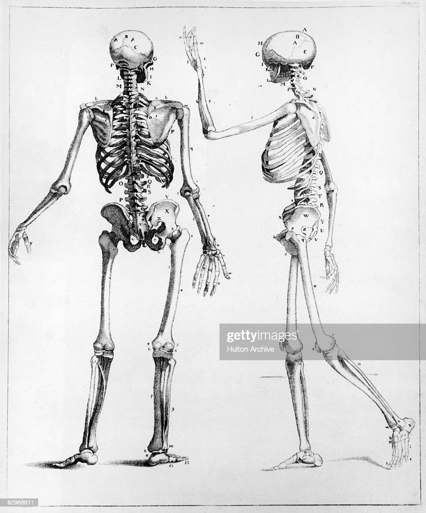 Human Skeletons Pictures Getty Images