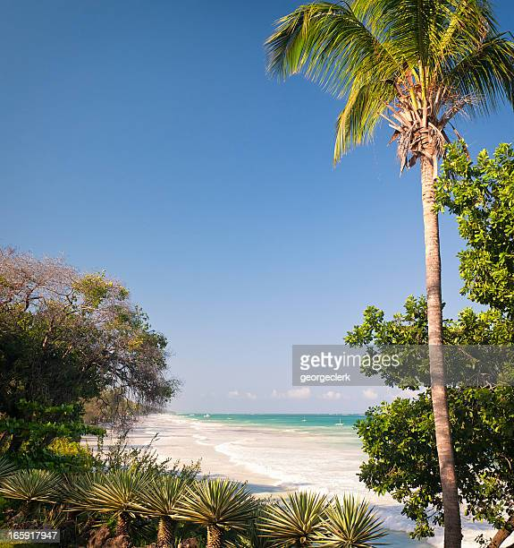 diani beach in kenya - mombasa stock photos and pictures