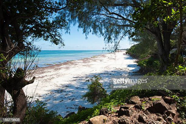 diani beach near mombasa - mombasa stock photos and pictures
