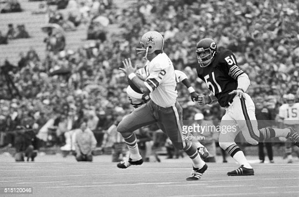 Dick Butkus , of the Chicago Bears, dispelling rumors that he would not play because of a bad knee, gives chase to Dallas Cowboys quarterback Roger...