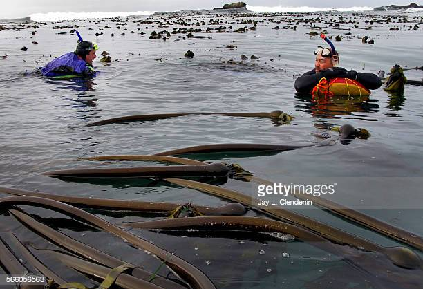 MENDOCINO CA – OCTOBER 2008– Dick Nachtsheim left and Chris Ingram rest on their float tubes while in the kelp–filled waters of Van Damme State Park...
