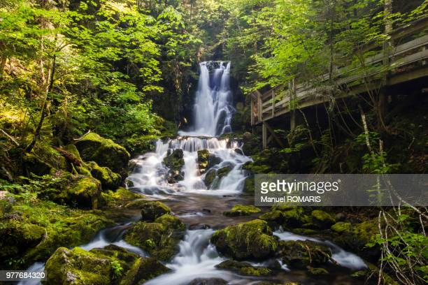 dickson falls, fundy national park, canada - new brunswick canada stock pictures, royalty-free photos & images