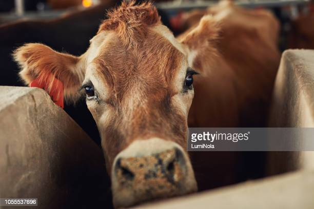 did someone say hay? - herbivorous stock pictures, royalty-free photos & images