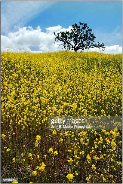 did you want mustard with that? - thousand oaks - fotografias e filmes do acervo