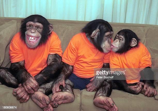 Die Affen Baxter Annie Harry neben den Dreharbeiten zur ZDFSerie'Unser Charly' 100Folge Affen Schimpansen lachen Küßchen küssen PrNr 541/2002