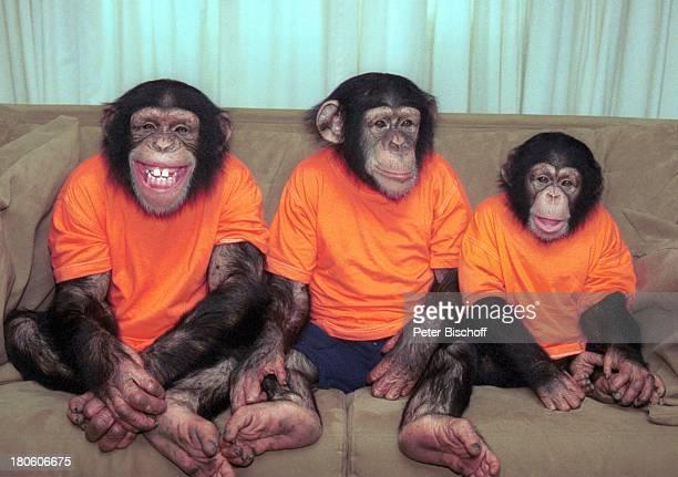 Die Affen Baxter Annie Harry neben den Dreharbeiten zur ZDFSerie'Unser Charly' 100Folge Affen Schimpansen lachen PrNr 541/2002