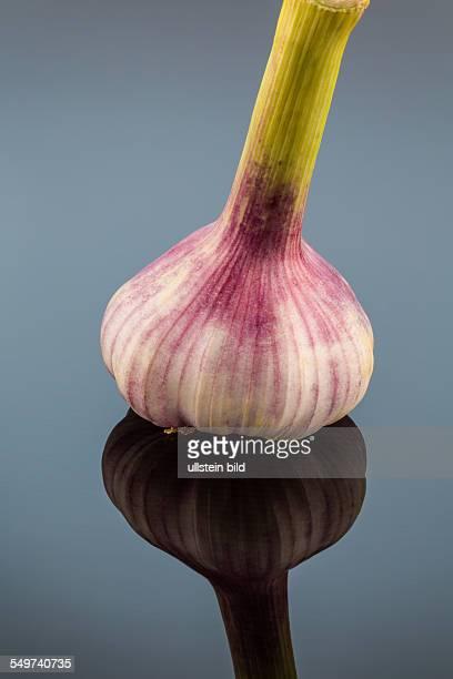 Die Aufnahme einer Zwiebel im Studio Obst und Gemüse haben Vitamine
