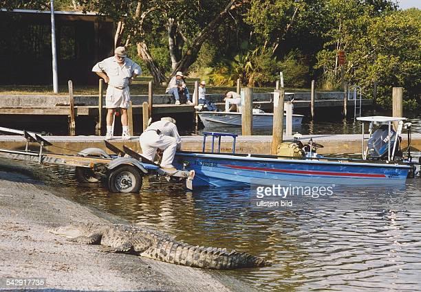 Die Everglades ein Sumpfgebiet an der Südspitze Floridas sind seit 1947 als EvergladesNationalpark Schutzgebiet für Pflanzen und Tiere Männer ziehen...