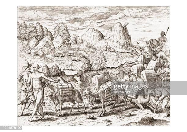 Die Ilalas sind lasttragende Schafe und haben wenig Wolle Sie sind größer dann Schaff und kleiner dann Kälber haben lange Hälse wie Cameel Man darf...