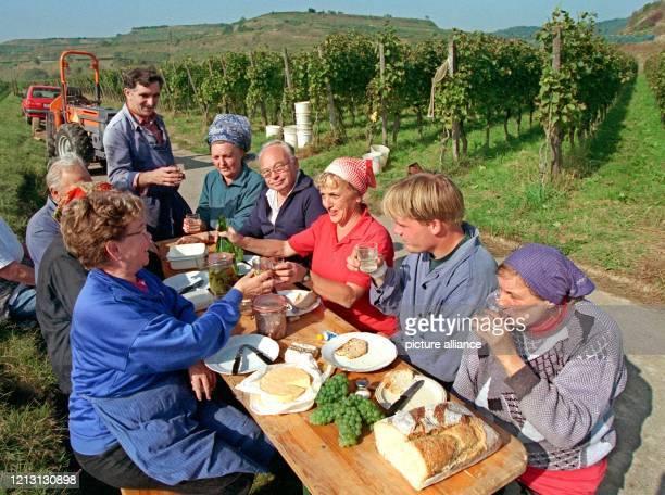 Die Kaiserstühler Winzerfamilie Ernst Schneider stößt am bei einer zünftigen Vesper während einer Erntepause in ihrem Weinberg bei Ihringen auf den...