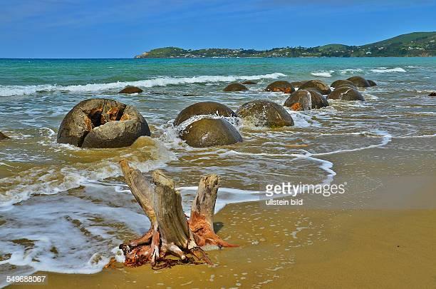 Die Moeraki Boulders wurden vor 60 Millionen Jahren auf dem Meeresboden aus Ablagerungen von Kalksalzen geformt und gelangten durch Anhebung des...