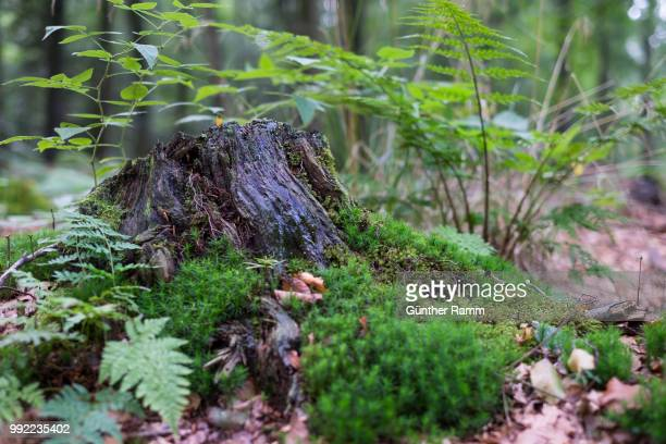 die natur im wald - natur stock pictures, royalty-free photos & images