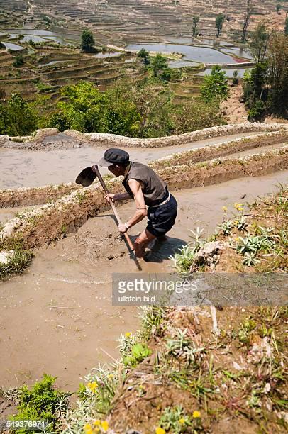 die Reisterrassen von Yuanyang Bauer bei der Arbeit