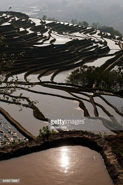 die Reisterrassen von Yuanyang