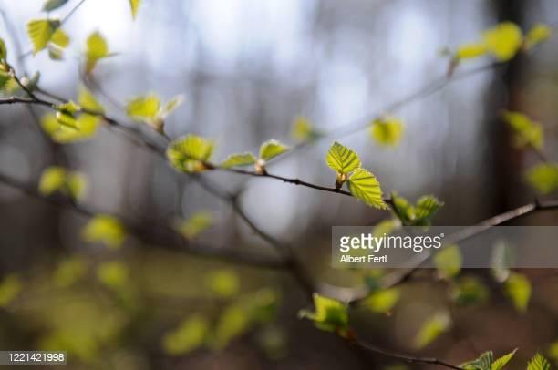 die schönheit des waldes - schönheit fotografías e imágenes de stock