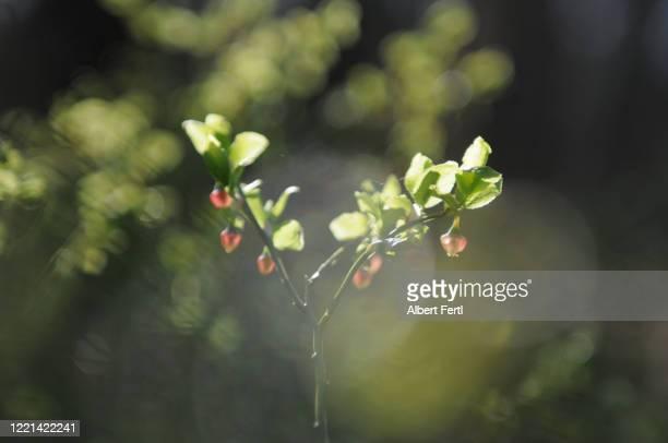 die schönheit des waldes - schönheit stock pictures, royalty-free photos & images