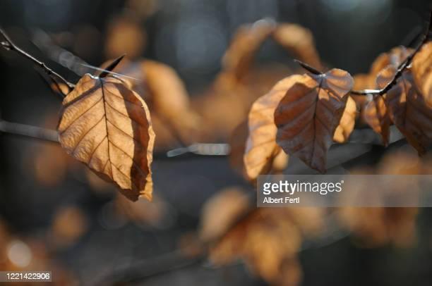 die schönheit des waldes - schönheit photos et images de collection