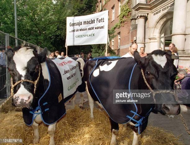 Die Umweltorganisation Greenpeace hat am 17.9.1997 Kühe vor das Robert-Koch-Institut in Berlin getrieben. Mit den Rindviechern wollte Greenpeace...