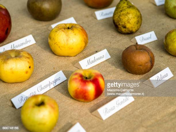 Different apples varieties on a table