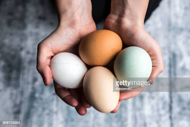 different eggs, white, brown, light brown and green eggs - brown stock pictures, royalty-free photos & images