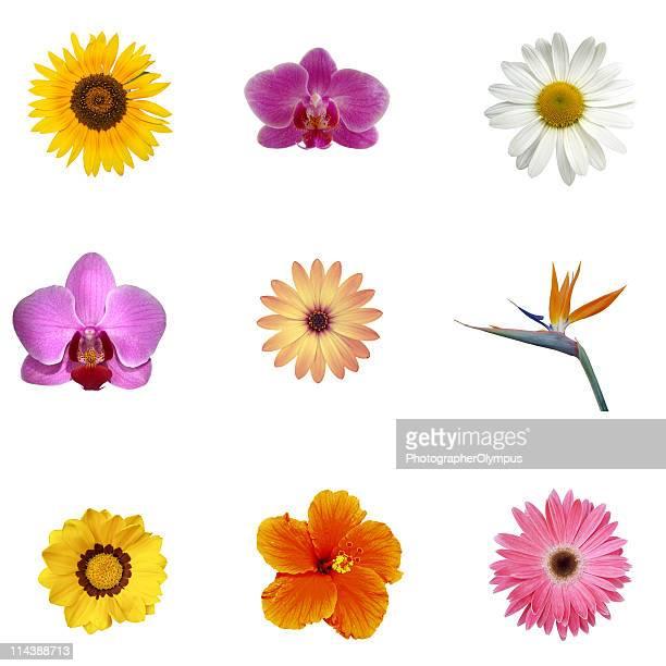 Verschiedene exotische Blumen XXXL