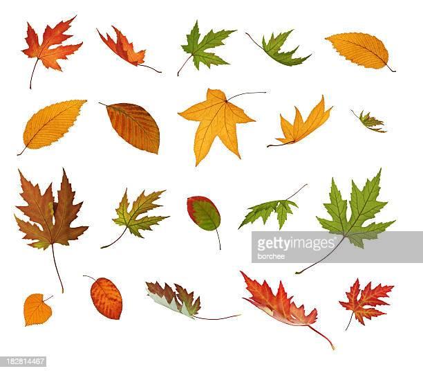 Verschiedene fallen Herbst Blätter