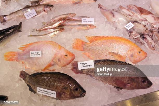 306 Kinds Of Fish Photos And Premium High Res Pictures Getty Images