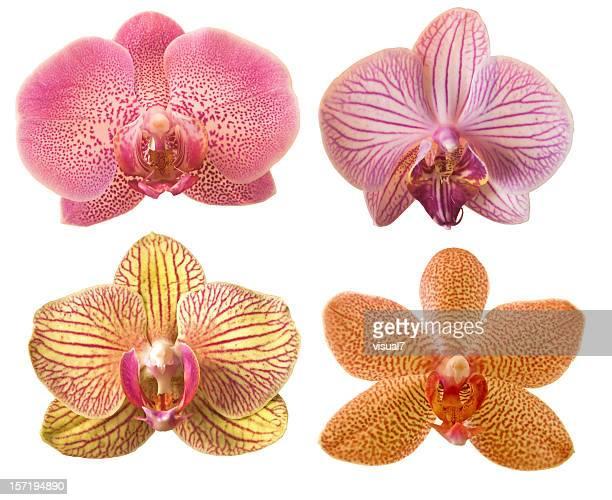 Diferentes orchids