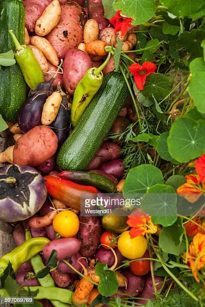 Different organic vegetables