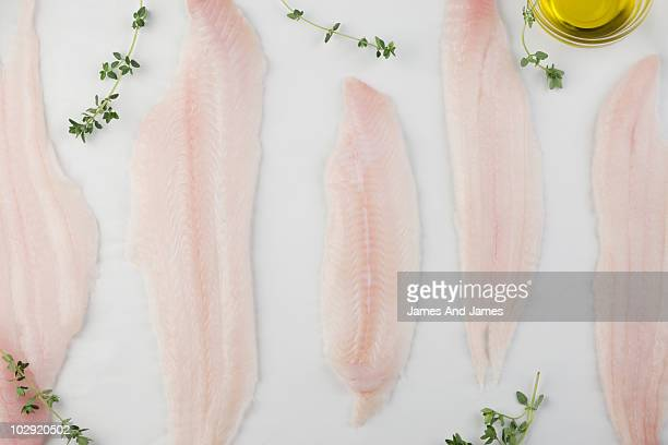 different sizes of dover sole fillets - linguado da areia imagens e fotografias de stock