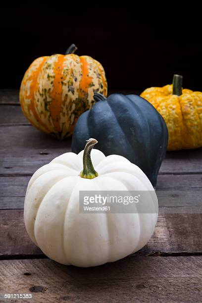 Different sorts of mini squashes with Baby Boo in the foreground