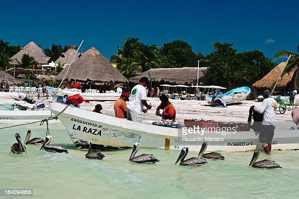 CONTENT] Different species with the same goal seafood Some fishermen are working on a boat while some pelicans are swimming around waiting for some...