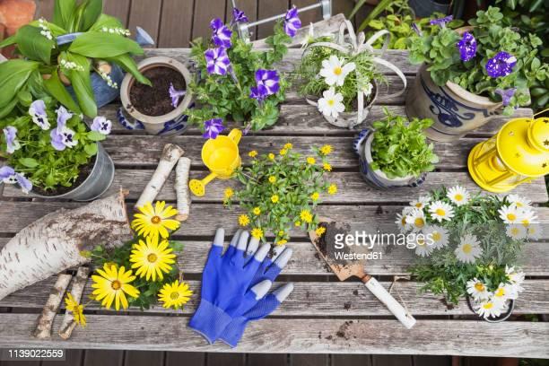 different summer flowers and gardening tools on garden table - muguet fleur photos et images de collection
