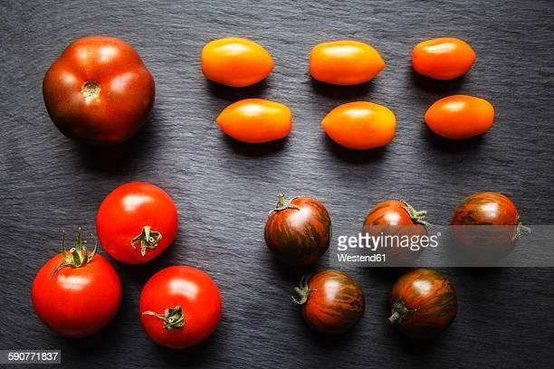 Different tomatoes, Zebrino, Ebeno, Devotion and yellow cherry tomatoes