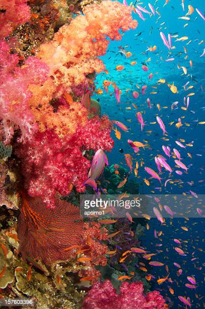 different types of fishes at the bottom of the sea - reef stock pictures, royalty-free photos & images