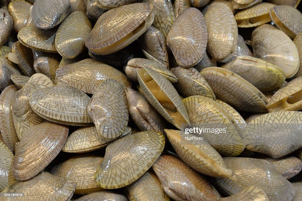 48419250b6c61a Different types of shellfish are used to make the sea food dishes in  Malaysia Alor Setar