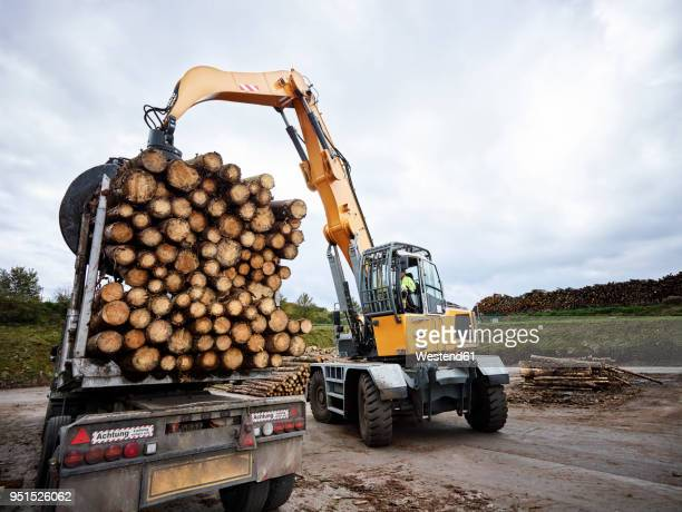 Digger loading trees on articulated truck