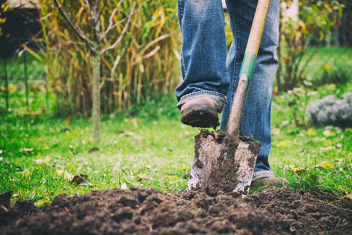 Digging in a garden with a spade 934411298