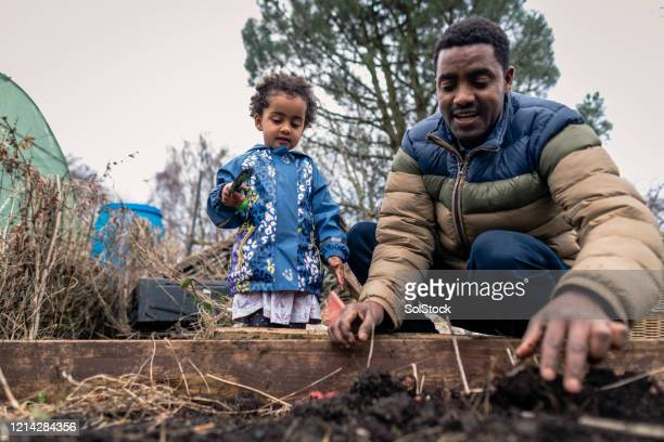digging in the garden - real people stock pictures, royalty-free photos & images