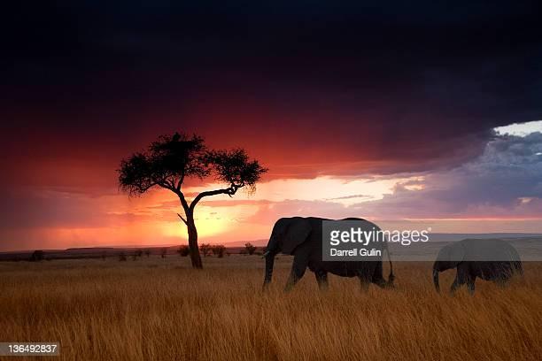 Digital Composit Elephants & Silhouette Tree