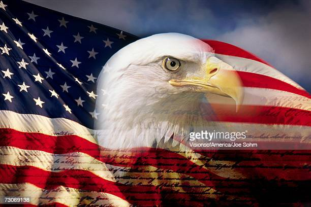 digital composite: american bald eagle and flag is underlaid with the handwriting of the us constitution - patriotic stock pictures, royalty-free photos & images